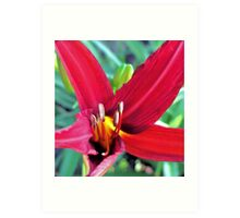 First Bloom - Daylily8 Art Print