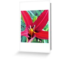 First Bloom - Daylily8 Greeting Card