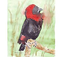 The Red Bishop 2 Photographic Print