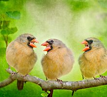 Songbird Trio by Bonnie T.  Barry