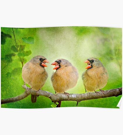 Songbird Trio Poster