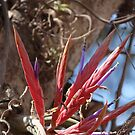 Epiphyte II - Epifita by Bernhard Matejka