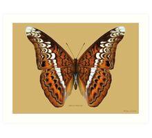 Admiral Butterfly Art Print