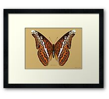 Admiral Butterfly Framed Print