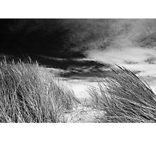 windswept Photographic Print