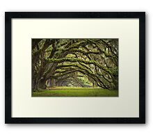 Avenue of Oaks - Charleston SC Plantation Live Oaks Framed Print