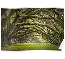 Avenue of Oaks - Charleston SC Plantation Live Oaks Poster