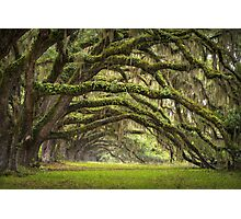 Avenue of Oaks - Charleston SC Plantation Live Oaks Photographic Print
