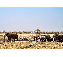 Waterhole in Etosha National Park/ Namibia 4 Photographic Print
