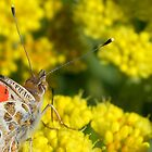A Butterfly's View by Betsy  Seeton