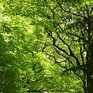 fresh leaves by annet goetheer