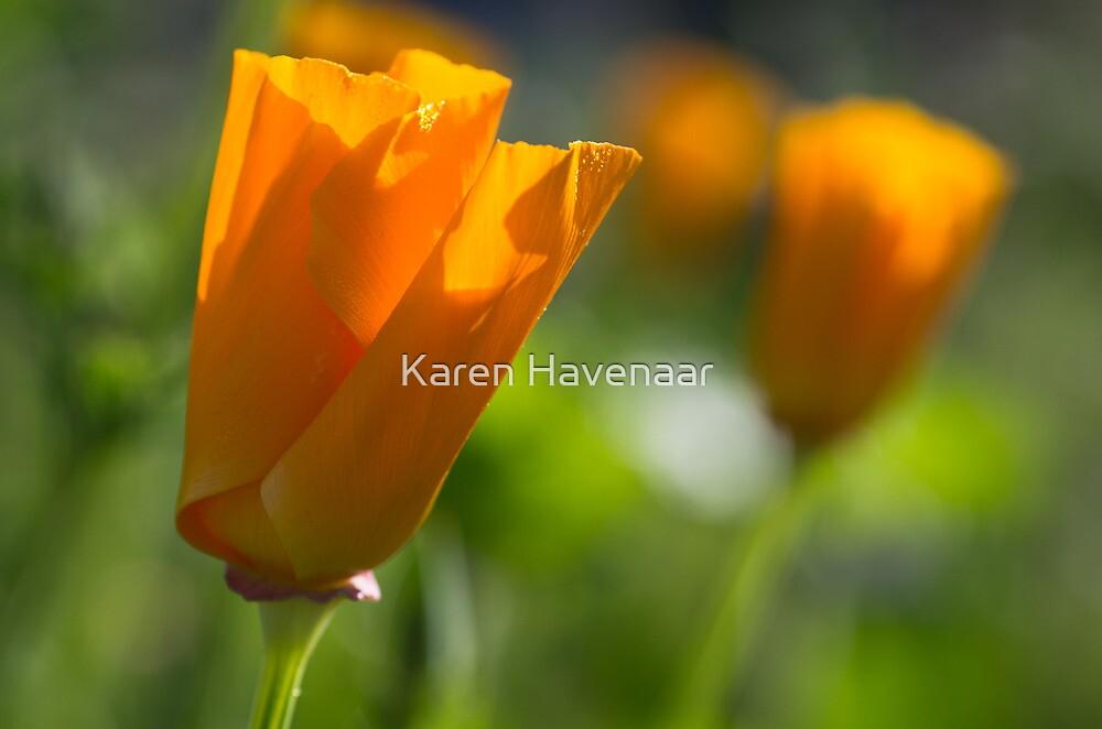 Orange and green by Karen Havenaar
