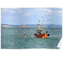 Feast For Gulls- Lyme Regis, Dorset Poster