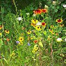Wildflower Garden by nikspix