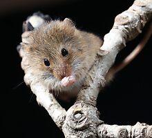 Mouse by photobymdavey