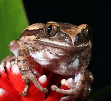 Tree Frog by photobymdavey