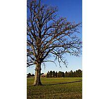 November Tree in Michigan Photographic Print