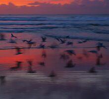 bird impression by geophotographic