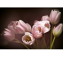 Those pink tulips Photographic Print