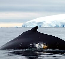 Humpback Whale by geophotographic