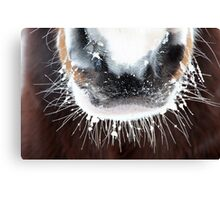 An irresistible frosty muzzle Canvas Print