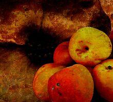 apricots by NIKULETSH