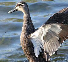 Ducky by Jonathan Cassar