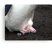Penguin feet , Antarctica Canvas Print