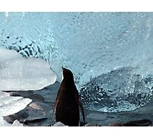 Penguin Ice Photographic Print