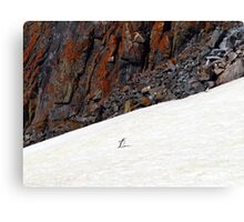 Penguin Highway Canvas Print