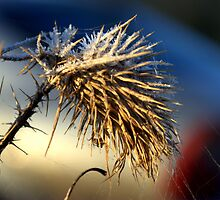 Frosted Spikes 2 by Candice O'Neill