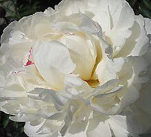 Fluffy White by Monnie Ryan