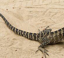 lizard by Anne Scantlebury