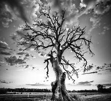 Hamilton Tree by hangingpixels