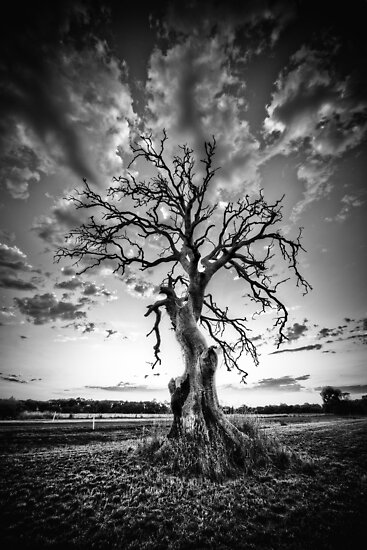 Hamilton Tree by hangingpixels