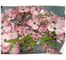 Pale Pink Dogwoods Outside the Wayne Library Poster