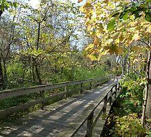 Scenic Autumn Walking Path by CuteNComfy