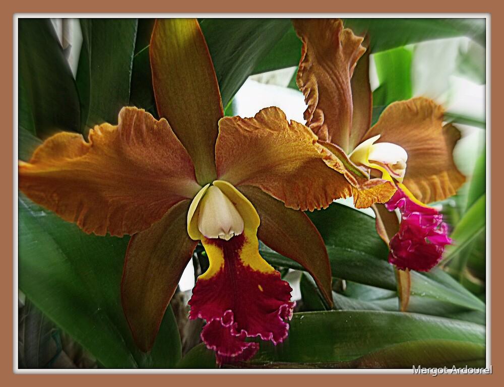 Orchid by Margot Ardourel