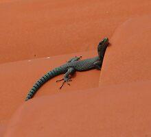 Lizard sunbathing on a roof in Dubrovnik by Hans Bax