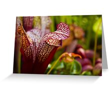 Cobra Lilies Greeting Card