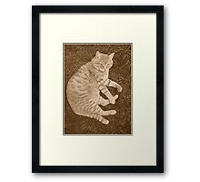 Fat Cat In the Grass Framed Print