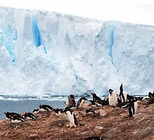 Nesting Penguins, Antarctica by geophotographic