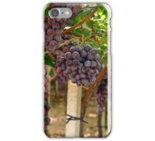 Italian Vinyard iPhone Case/Skin