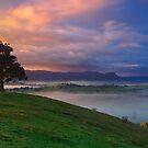 The tree of Stonelea  by Donovan wilson