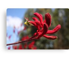 Red Furry Flower Canvas Print