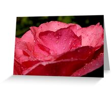 Drops on a rose after a rain shower. Greeting Card