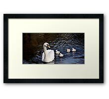 Swan With Cygnets Framed Print