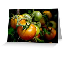 Drops on immature red and green tomato after a rain shower. Greeting Card
