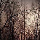 Spring Trees by ArtOfE
