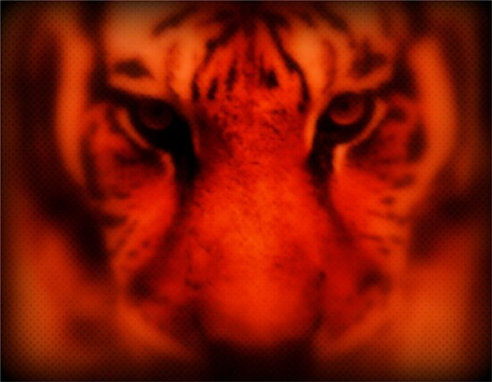 Eye of the Tiger by RockyWalley